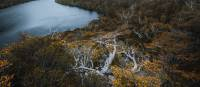 Head to Tasmania during autumn to see the fagus, Australia's only cold climate winter-deciduous tree | Jason Charles Hill