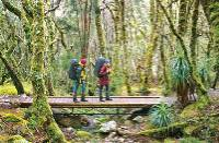 Walking in Cradle Mountain Lake St Clair National Park |  <i>Don Fuchs</i>