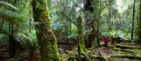 Explore the enchanting and changing moods of the ancient Tarkine Rainforest | Pete Harmsen
