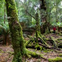 Explore the enchanting and changing moods of the ancient Tarkine Rainforest   Pete Harmsen