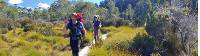 The Overland Track offers well maintained boardwalks to protect the fragile environment |  <i>Chris Buykx</i>