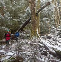 Walk through a forest of snow and trees along Tasmania's Overland Track during winter |  <i>Andrew Bain</i>