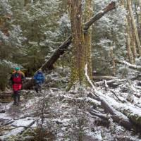 Walk through a forest of snow and trees along Tasmania's Overland Track during winter   Andrew Bain
