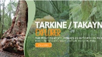 Discover the ancient Tarkine Rainforest